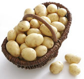 A lot potatoes — Stock Photo