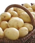 Kartoffeln in den korb — Stockfoto