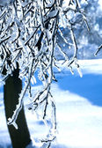 Frozen branch — Стоковое фото