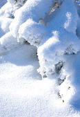 Snowbound branch of fir — Stock Photo