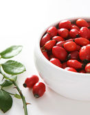 Red dog rose hips. Briar — Stock Photo