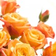 Stock Photo: Orange roses