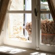 View thru old window - Stockfoto
