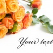 Beautiful orange roses - Stock Photo