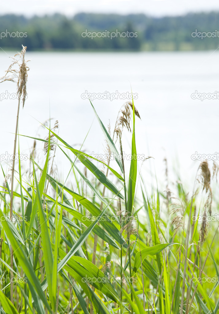 Summer landscape. Green grass on 1st plan, lake on 2nd — Stock Photo #2102155