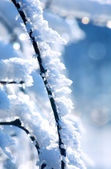 Branch with snow — Stock Photo