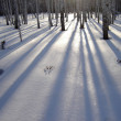 Shadows of trees� — Stock Photo