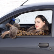 Stock Photo: Beauty woman in the car