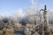 Trees in a hoarfrost — Stock Photo