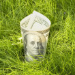 Growing dollars — Stock Photo