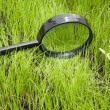 Magnifying glass on grass — Stock Photo