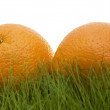 Oranges on grass — Stock Photo #1791420