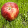 Red apple on green field — Stock Photo