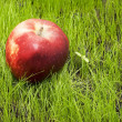 Apple on green grass — Stock Photo