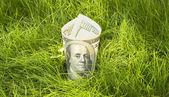 Growing dollars — Stock Photo