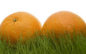 Oranges on grass — Stock Photo