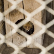 Stock Photo: Fox in zoo