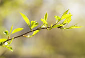 Twig — Stock Photo