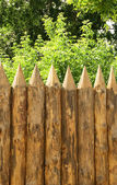 Fence and trees — Stock Photo