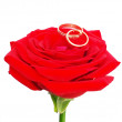 Red rose with a wedding rings — Stockfoto