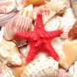 Starfish and seashells — Stock Photo