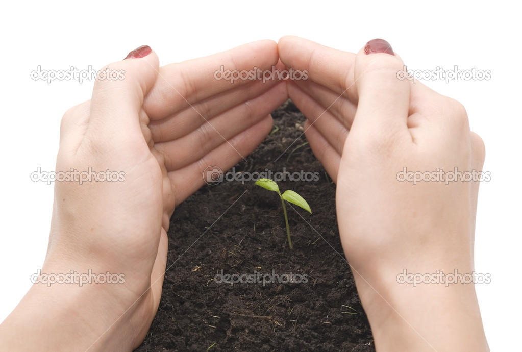 Hands  protecting a small plant — Stock Photo #1827149