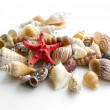 Cockshells — Stock Photo