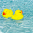 Stock Photo: Two rubber ducklings