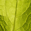 Leaf — Stock Photo #1883417