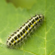 Caterpillar — Stockfoto #1887467