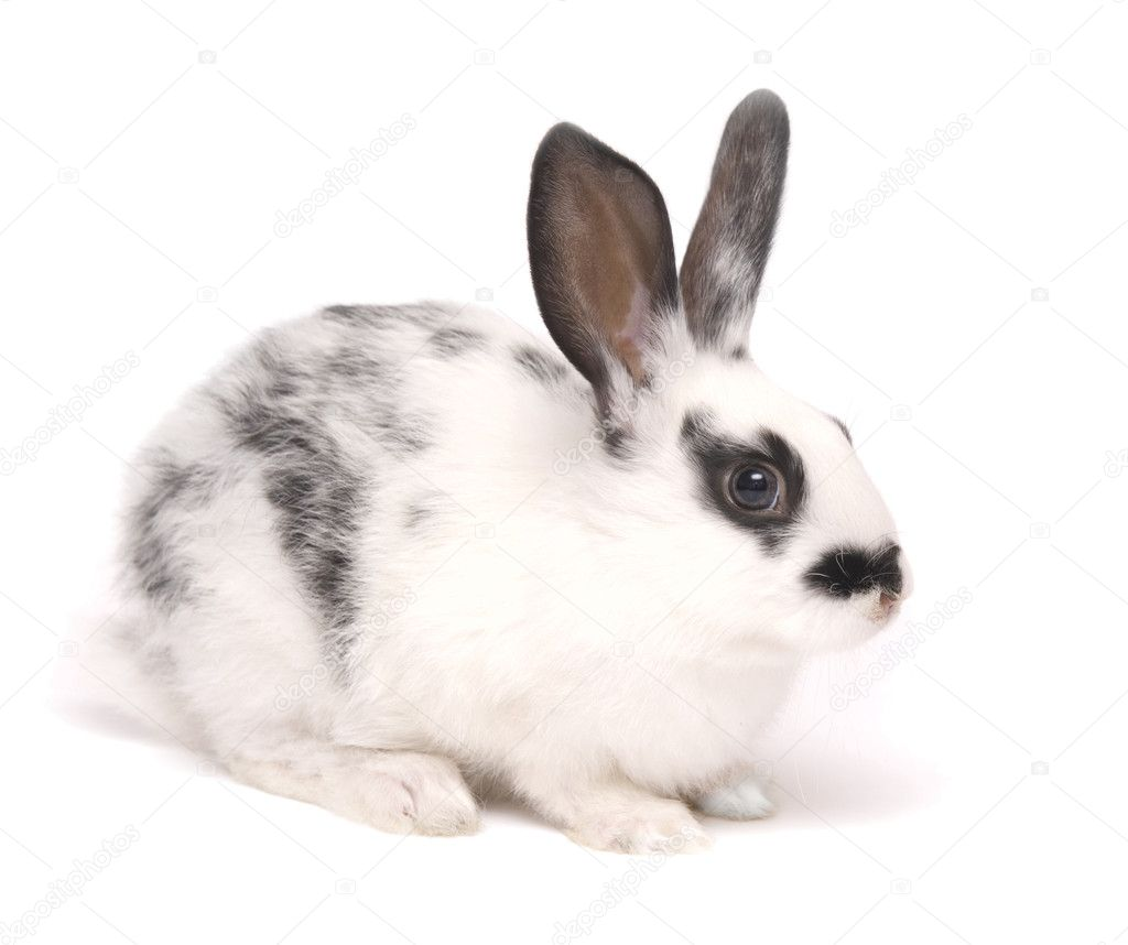 Cute rabbit isolated on white — Stock Photo #1884951