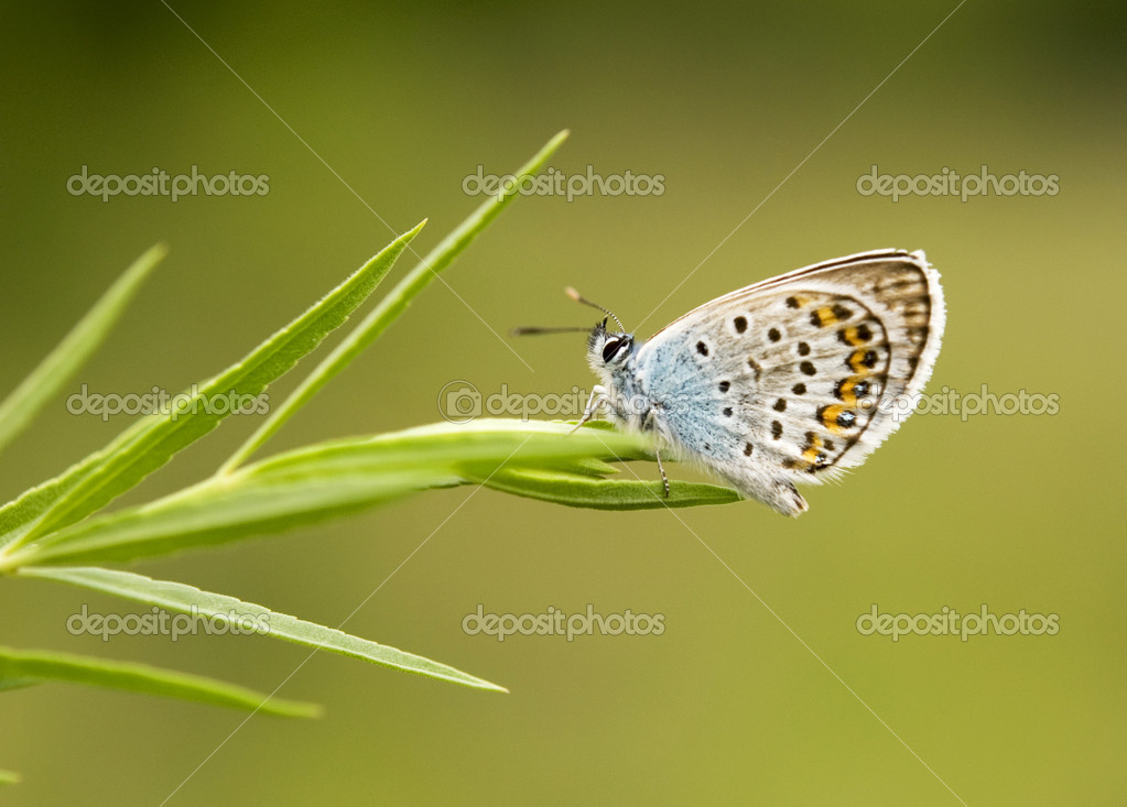 Beautiful butterfly on a green leaf — Stock Photo #1890151