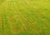 зеленая трава — Стоковое фото