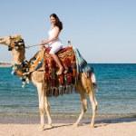 Woman on camel — Stock Photo