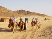 Traveling on camels in desert — Stock Photo