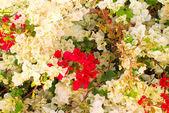 Arbre fleur — Photo