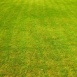 Green grass — Stock Photo #2525507