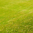 Green grass — Stock Photo #2563781
