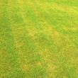 Green grass — Stock Photo #2576242