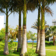 Palms on lawn — Stock Photo