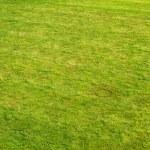 Lawn — Stock Photo #2607928