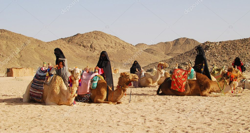 Camels in desert, Egypt  Stock Photo #2607878