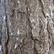 Bark — Stock Photo #1828535