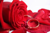 Scarlet rose with wedding rings — Stock Photo