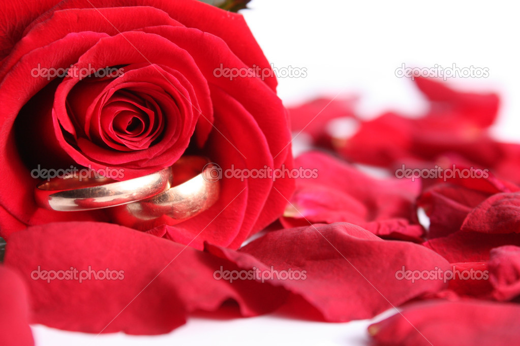 Scarlet rose with wedding rings — Stock Photo #1995968
