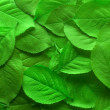 Juicy green leafs — Stock Photo