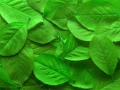 Juicy green leafs — Stock Photo