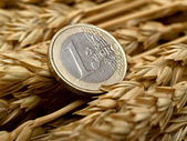 Euro and ears of wheat — Stock Photo
