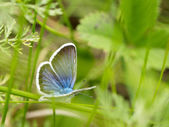 Wild butterfly — Stock Photo