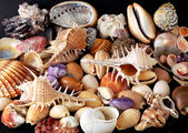 Alluvial of Mediterranean seashells — Stock Photo